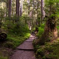 It's a fairly level, short trail to the falls- Sol Duc Falls