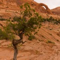 Classic desert landscape with a massive arch in the background- Corona Arch Trail