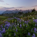Full meadows and the Tatoosh Range from the Stevens Van Trump Memorial- Skyline Trail Hike