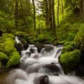 Ruckel creek is full of the softest moss- Ruckel Ridge Loop Hike