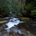 Diamond creek- Salt Creek Falls
