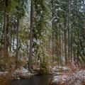 Silver Creek below South  Falls- Silver Falls, Trail of 10 Falls