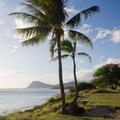 A few palms site atop the short bluff.- Tracks Beach Park