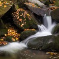Middle Prong Little Pigeon River- Great Smoky Mountains National Park
