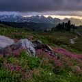 Thick wildflowers along the Golden Gate Trail with dramatic lighting over the Tatoosh Range.- Mount Rainier National Park