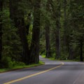 Redwoods line the Newton B Drury Scenic Rd through Prairie Creek Redwoods State Park- Redwood National + State Parks
