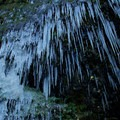 Icicles create hang fire from a gorge cliff- Columbia River Gorge National Scenic Area