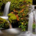 A small cascade on Oneonta Creek- Columbia River Gorge National Scenic Area