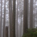 Thick fog provides an eerie feeling on the steep northern slope.- Neahkahnie Mountain Hike