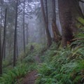Thick fog settles in the old growth forest at the north end of the park.- Oswald West State Park