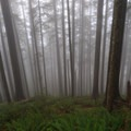 Thick fog provides an eerie feeling on the northern slopes of Neahkahnie Mountain.- Oswald West State Park