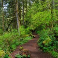 The trail to Shellburg Falls.- Shellburg Falls Loop Hike