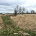 (dog included for scale)- Sandy River Delta, Thousand Acres Park