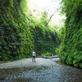 Ferns line entire walls of this canyon- Fern Canyon