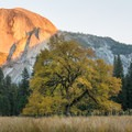 Popular shot of Half Dome at sunset from the valley- Yosemite National Park