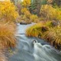 Burney Creek given a coat of gold- McArthur-Burney Falls Memorial State Park