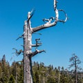 Cool dead tree near Bear Lakes- Bear Lakes Loop via Round Lake