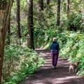The trail is dog-friendly- Cape Lookout Hiking Trail