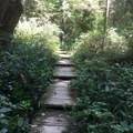 Ozette Triangle Loop Trail