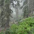 Beautiful forest- Whetstone Mountain Hike