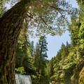spirit falls through the fisheye- Spirit Falls Hike