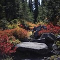 Jefferson Park Hike via Park Ridge