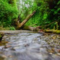 Water flowing in Fern Canyon.- Fern Canyon