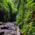 Fern Canyon looking sharp.- Fern Canyon