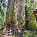 Trees so big you just want to Scream!- Jedediah Smith Redwoods State Park