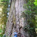 Certainly a place tree fans have GoT to visit.  Just be careful to not get Lost while looking for the big ones.- Jedediah Smith Redwoods State Park