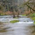 Drift Creek- Harris Ranch Trail