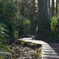 One of the few sections of trail that has boardwalk.- Cape Lookout Hiking Trail