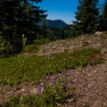 Wildflowers litter the trail to Dome Rock.- Dome Rock + Tumble Lake Hike
