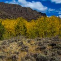 Aspens and Cottonwoods dominate the landscape- Big Indian Gorge