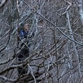 Climbing through the forest of branches between the riverbeds (not a part of the trail)- Muddy Fork