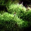 Mossy growth- McKenzie River Trail