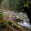 Branches, stumps, and rocks covered in moss as you hike along the river- McKenzie River Trail
