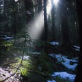 A ray of sun filtering through the tree canopy to provide a seedling with light- Barlow Butte Hut