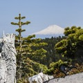 View of Mt Adams along the trial to McNeil Point- Mount Hood: Sandy Glacier Ice Caves