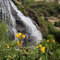 A closeup of Alamere Falls during spring- Palomarin Hike to Alamere Falls