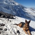 - A Guide to Summer Adventuring with Your Dog