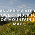 - An Abbreviated Flower Finder for Dog Mountain in May