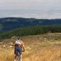 Mountain biking through clearcut in Polk County, Oregon.- Oregon, Home of the Clearcut