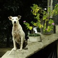 A friendly local pup and his flowers.- 3-day Adventure Itinerary in Puerto Vallarta, Mexico