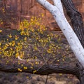 Colors in Zion National Park.- Leica Akademie Photography Workshop in Zion National Park