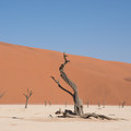 Dead Vlei.- The Ultimate Namibia Road Trip
