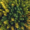 Fall aspens along the Upper Deschutes River Trail.- Oregon Fall Adventures