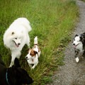 Making new friends on the trail.- Dog Etiquette on the Trail