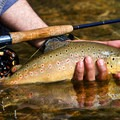 Fall is the perfect time catch a brown trout from Yellowstone waters. Photo courtesy of West Yellowstone, Montana.- 5 Reasons to Visit West Yellowstone, Montana this Fall