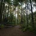 The trail to Drift Creek Falls.- 19 Adventures Between You and The Oregon Coast